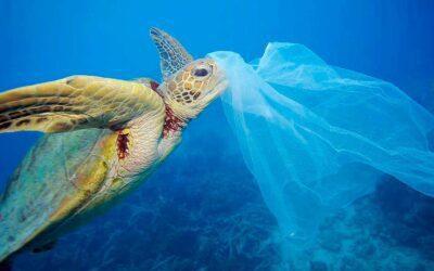 Más de 7.000 animales fueron heridos por plásticos el año pasado